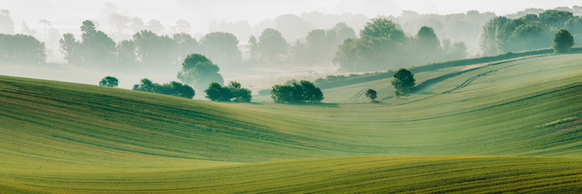 Image of downland trees in mist in jpg format